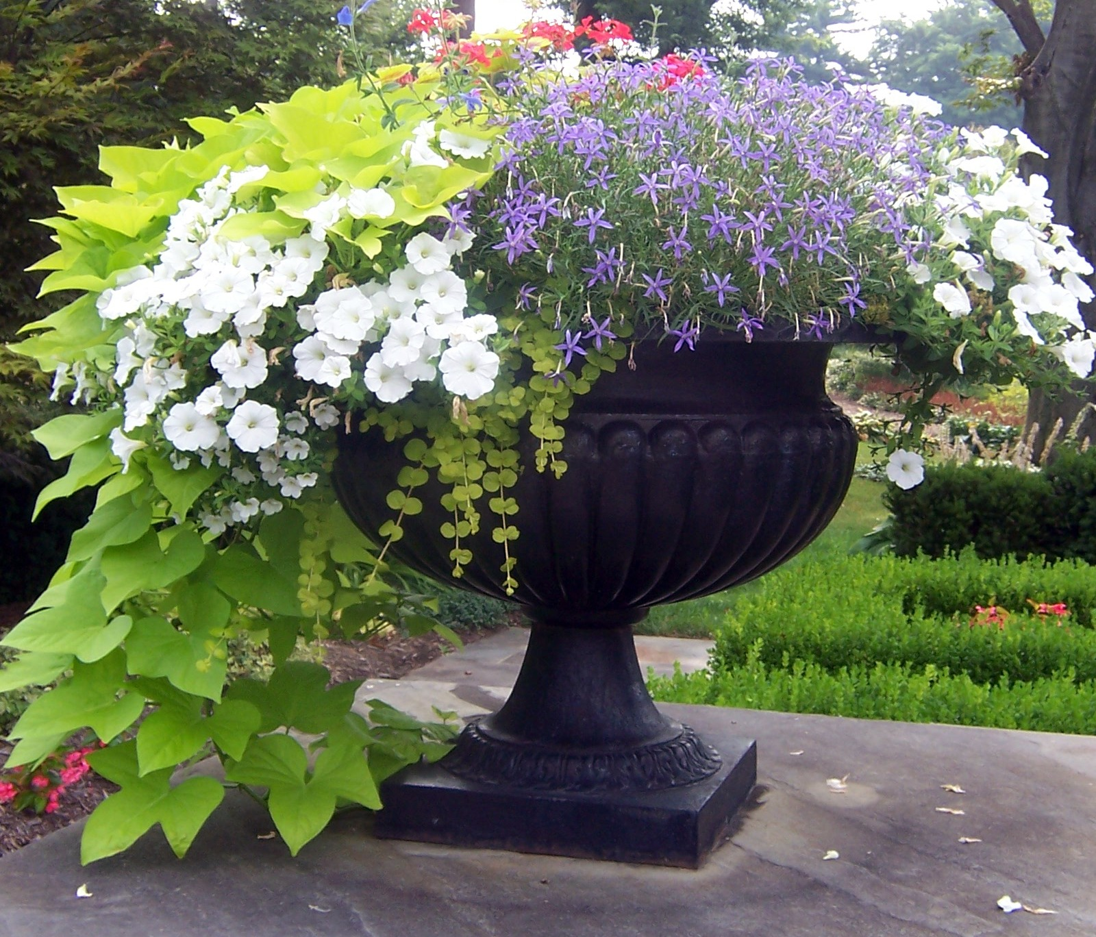 containers with pizazz not your ordinary container the garden