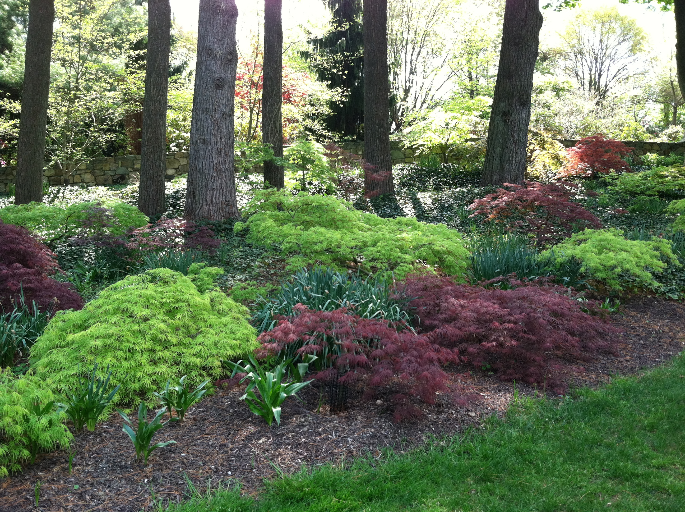 From the Ground Up u2013 Choosing the Right Ground Cover for Shade | The Garden Diaries