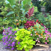 Bringing the Outside Indoors - The Seasonal Culling of Plants