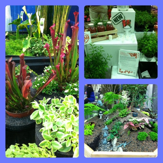 Aquatic plants in floating rings, Goji berry plants at Spring Meadow Nursery, a miniature garden at Meehans Miniatures