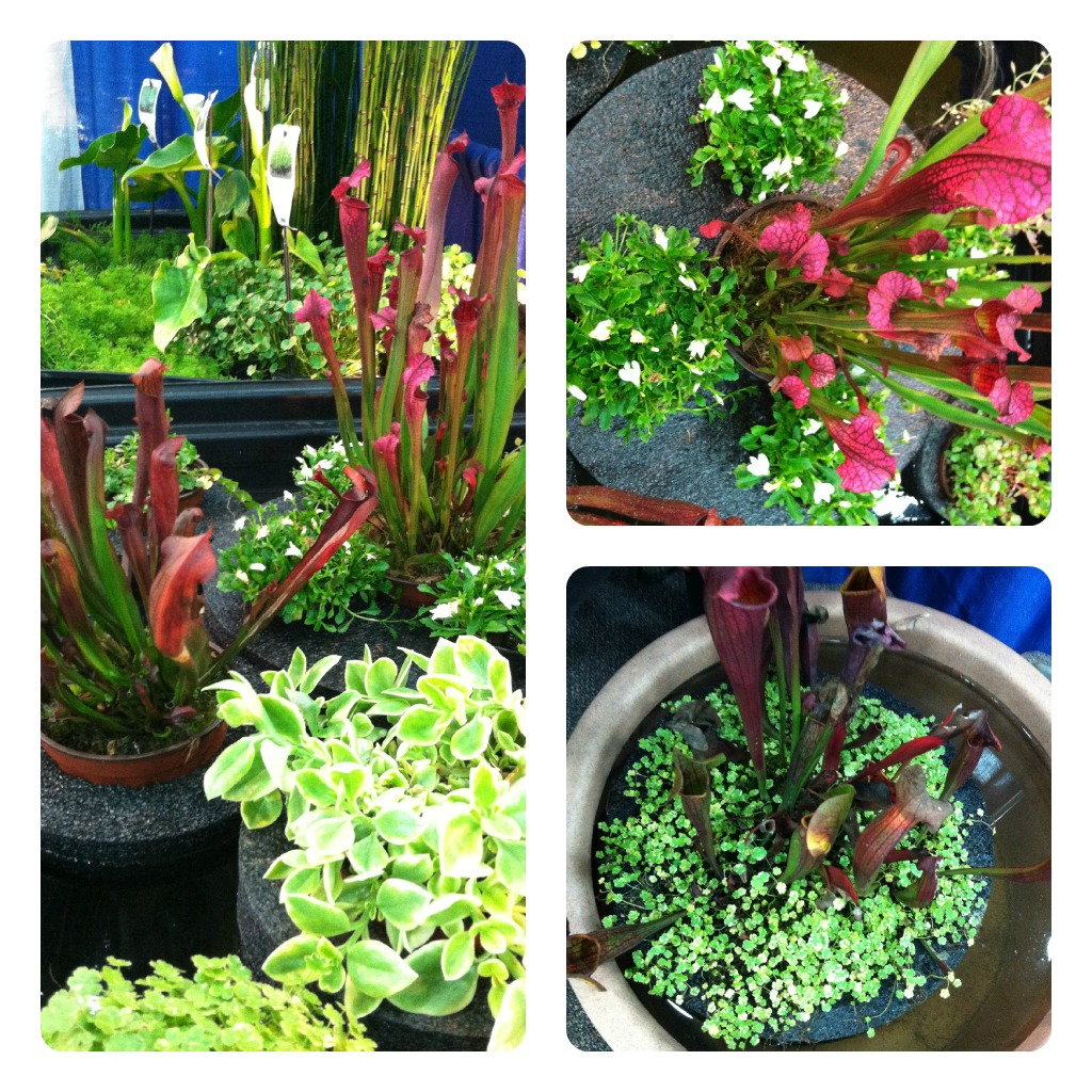 Mants show part 2 the garden diaries for Plastic floating pond plants