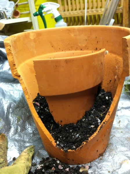 Place the piece in the pot and start adding potting mix