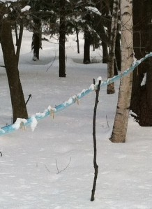A line held up with a branch