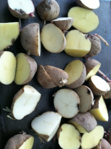 Cut up seed potatoes