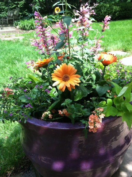 Another Leigh Barnes creation in a beautiful purple pot