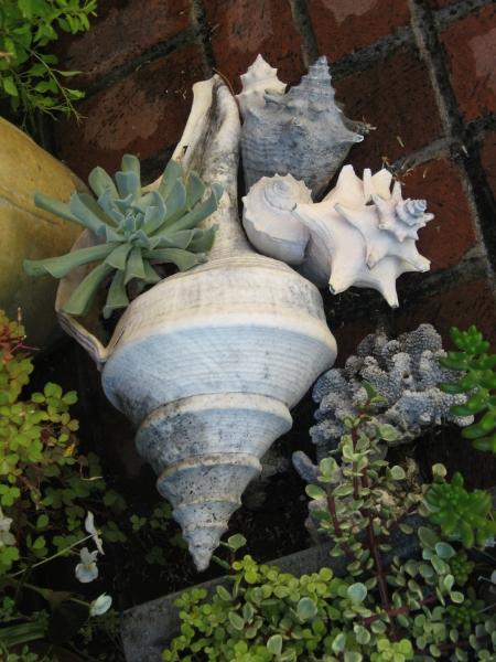 Sea shell vignette
