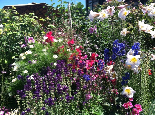 Great combinations are used in the demo gardens