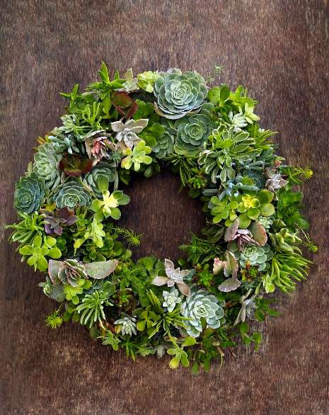 Beautiful living succulent wreath
