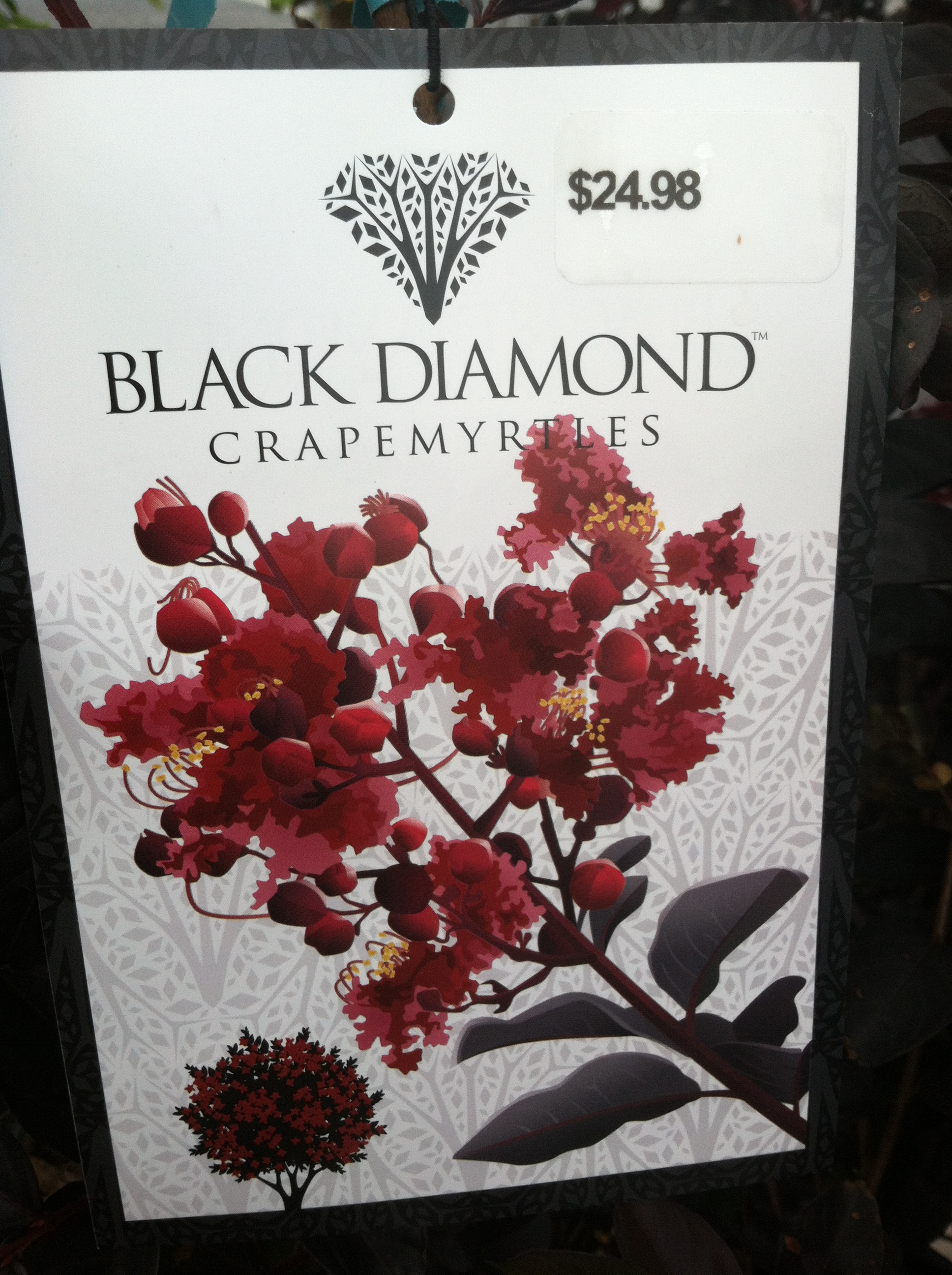 Black Diamond Crepe Myrtle Red Hot