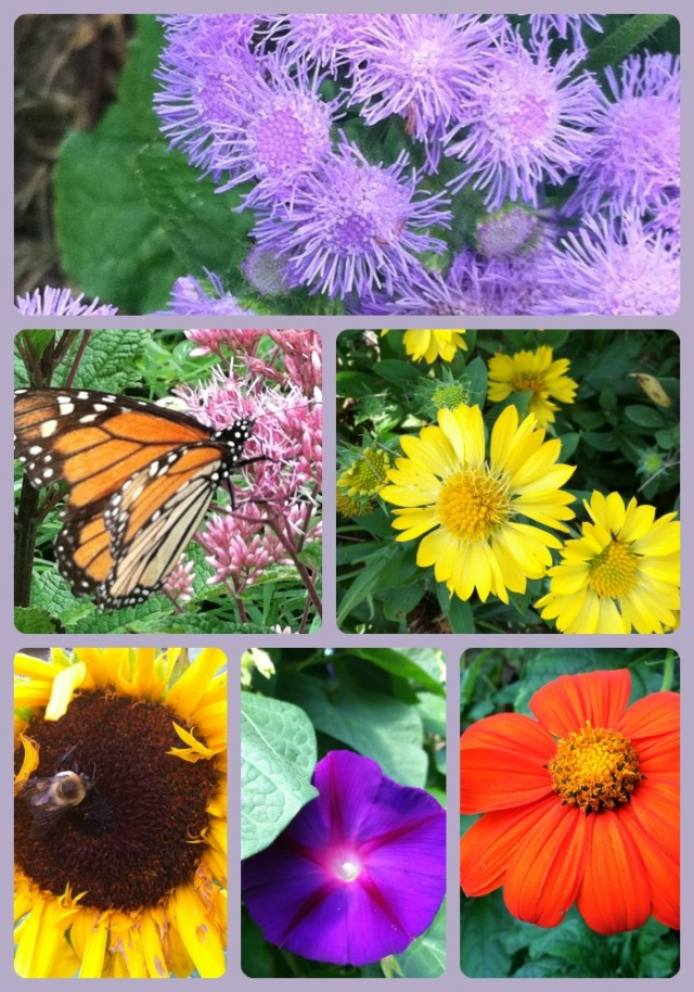 PicMonkey Collage autumn