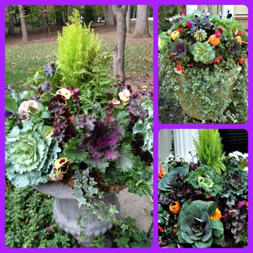Three creative fall containers by Marion of Mullan Nursery Company