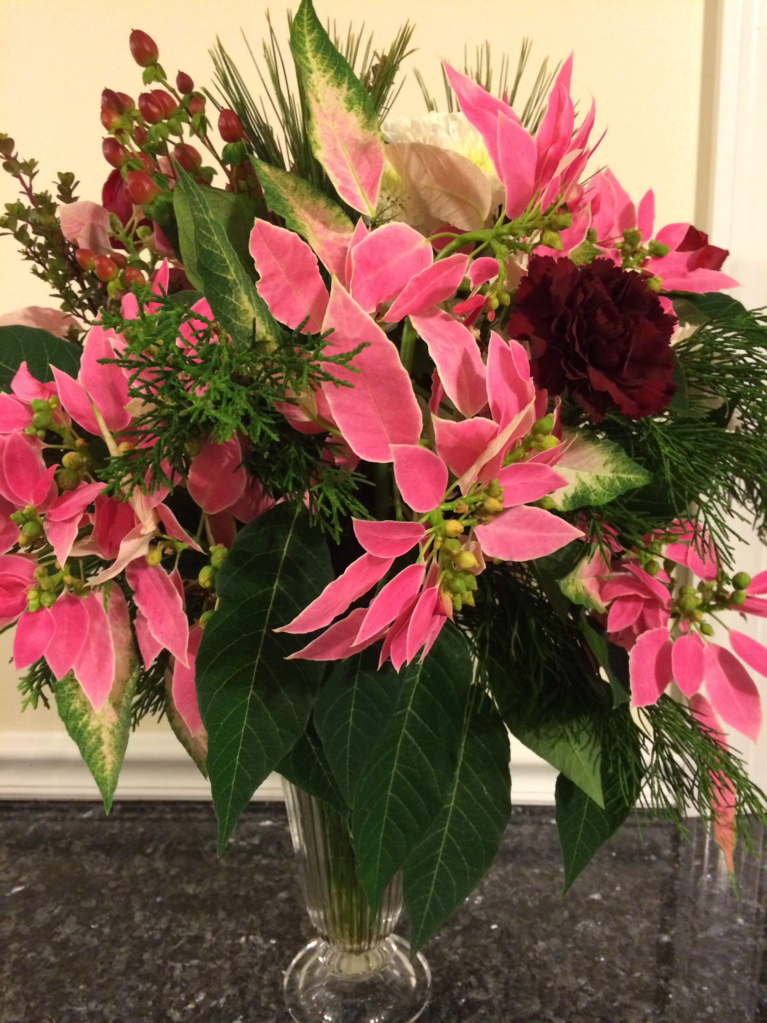 Poinsettia - History and Legends - The Garden Diaries
