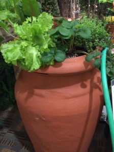 Rain barrel with edibles