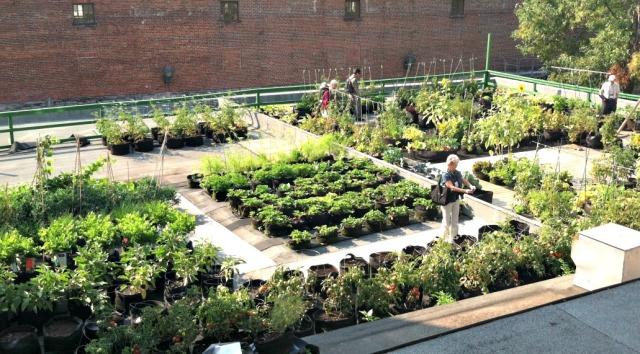 Rooftop garden in Quebec
