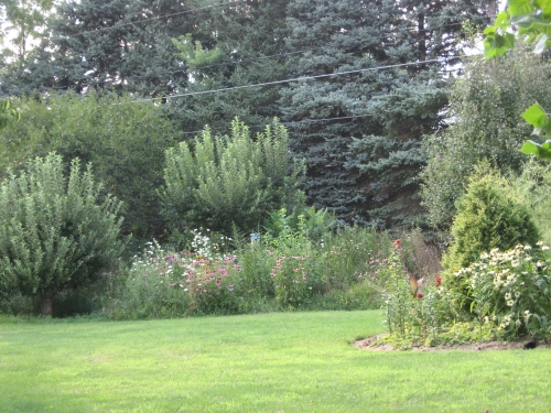 Let some areas in your yard to native