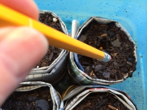 Press your seeds in the medium with the eraser end of a pencil