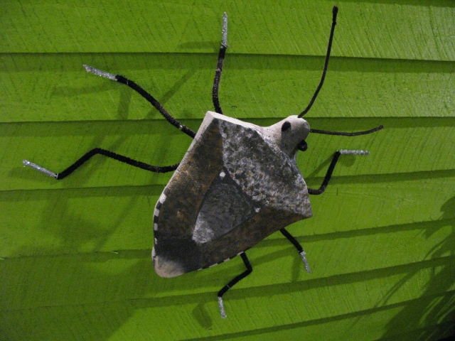 Marmorated Stink Bug