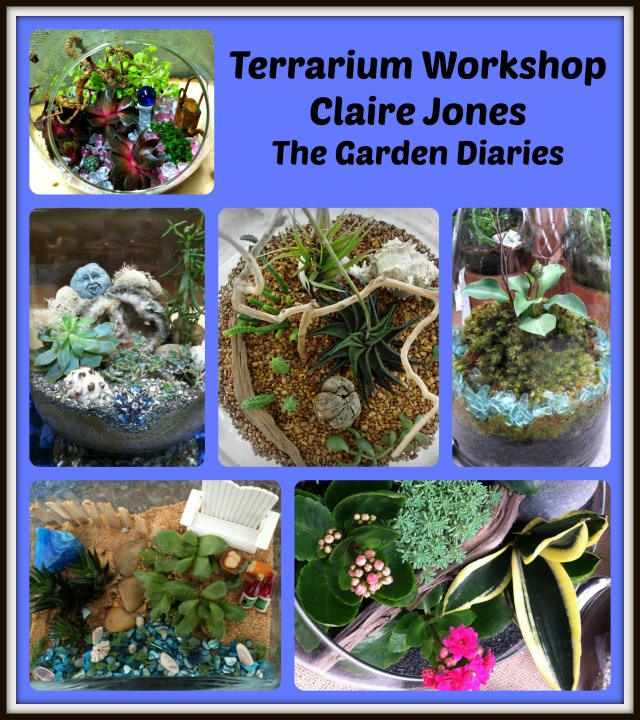 An assortment of terrariums that are easy to make