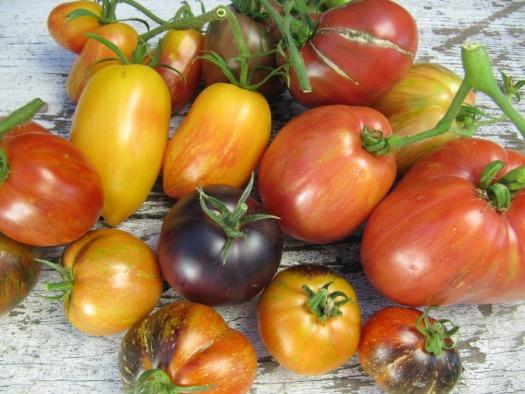 A beautiful palette of tomatoes from Wild Boar Farms