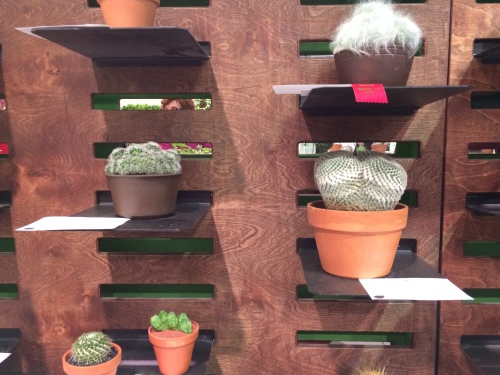 Lots of the horticulture displays were improved such as this wall of cactus