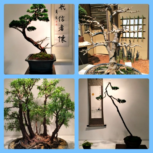 Bonsai at the Philly Show is a peaceful respite from the crowds