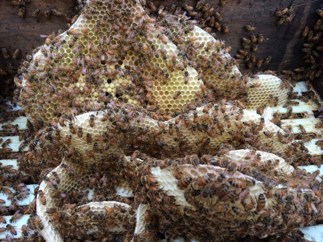 Honey comb formations in my hive