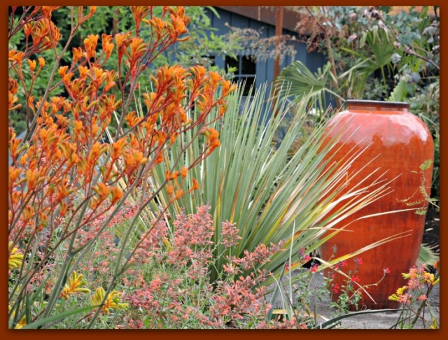 Orange urn with orange Kangaroo Paw at the Kuzma garden in Portland