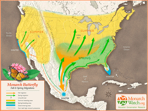 Migration map of monarch butterfly-used with permission of Paul Mirocha at http://paulmirocha.com/