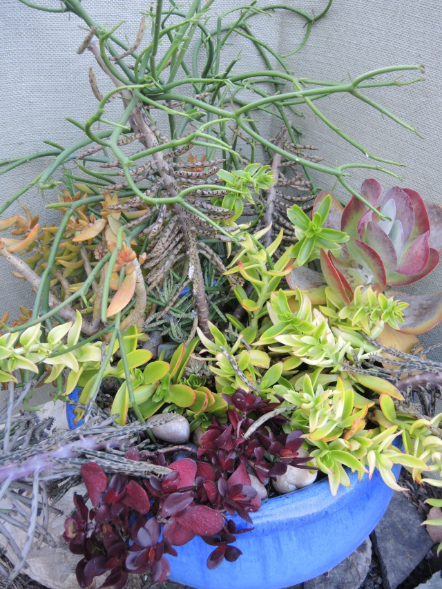 An overflowing succulent planter that I took cuttings from