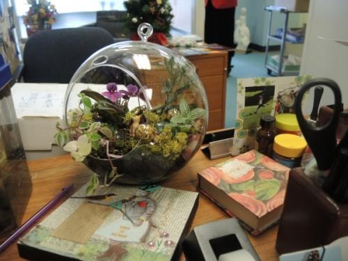 Globe terrarium sitting on a Hopkins desk top