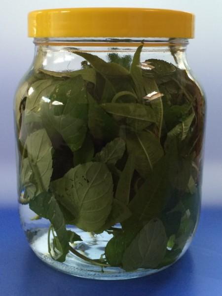Steeping herbs for tea
