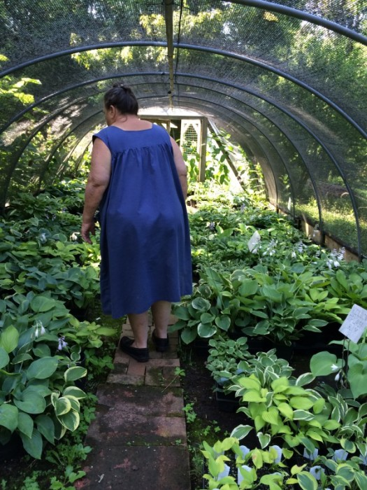 Sue Bloodgood surveying her dizzying array of hostas