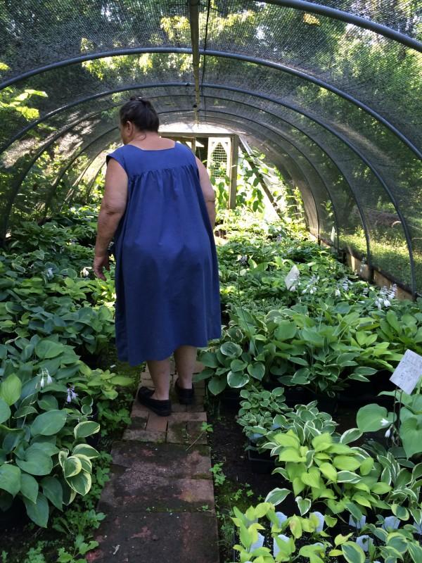 Sue Bloodgood surveying her dizzying array of hostas