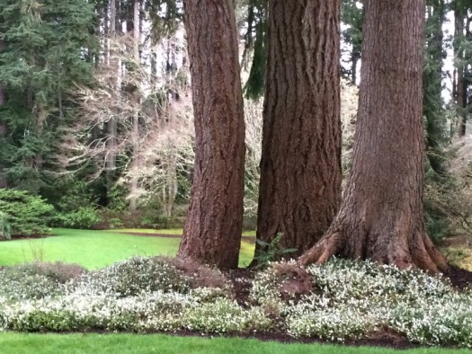 Balmy weather at the Bloedel Reserve brought out all the spring flowers