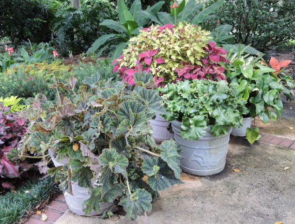 Different shades of foliage create an striking array of containers