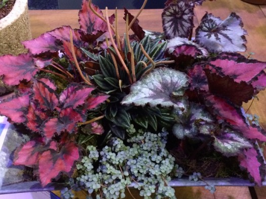 Mini garden with colorful Begonias