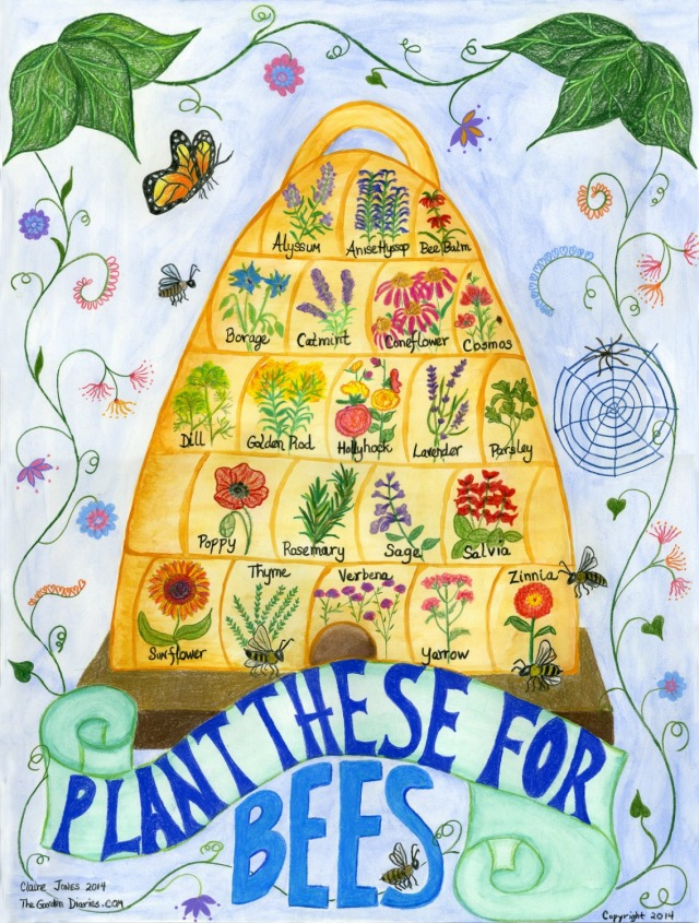 Bee Skep poster, go thttps://www.etsy.com/listing/182225449/18-x-24-pollination-poster-plant-these?