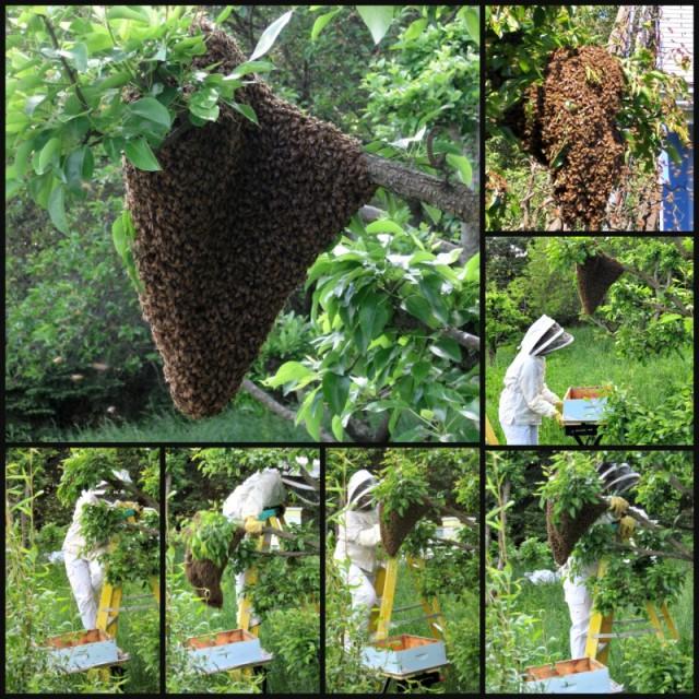 Capturing a swarm
