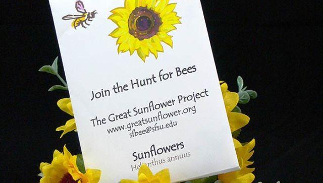 sunflowerproject-seeds-mountain-1