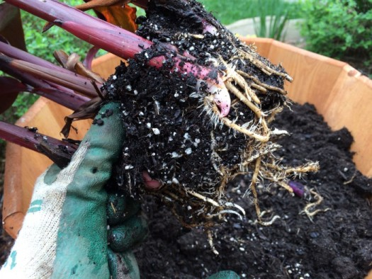 Scrape off excess soil around the root ball to fit all your plants into a confined space