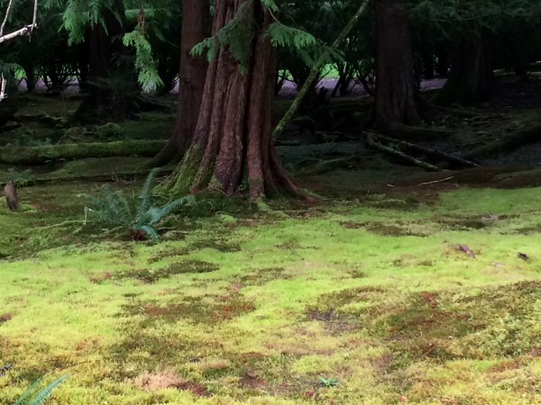 Moss lawns are easy in the Pacific Northwest