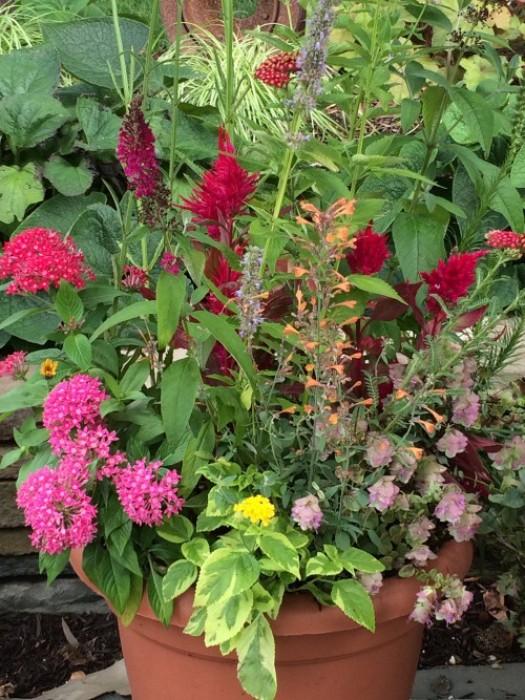 Pollinator garden in a container