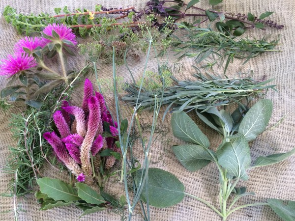 Materials for herbal wreath-Sage, tarragon, rosemary, cockscomb, globe amaranth, bay, dill, african blue basil, lavender, scented geranium