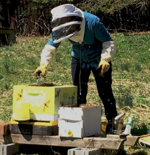 Installing a new Nuc package into a hive body