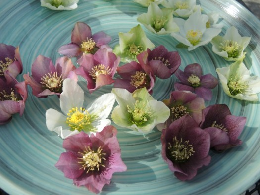 Hellebore flowers are prefect for this in late winter when you are craving spring