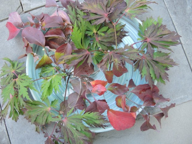 Start with foliage branches