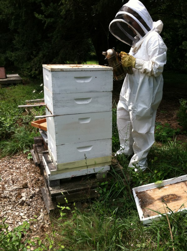 Placing a broodminder into a beehive can give you important information remotely