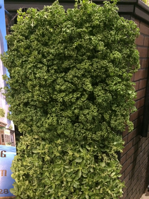 A living wall of herbs