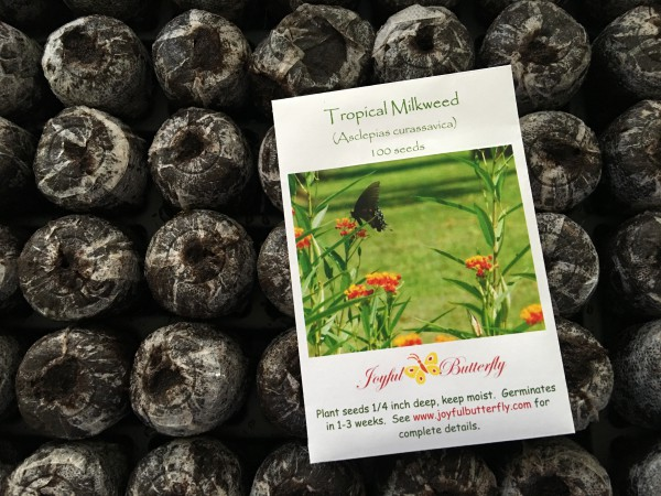 Sowing seeds in peat pots
