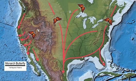 fallmigrationmap